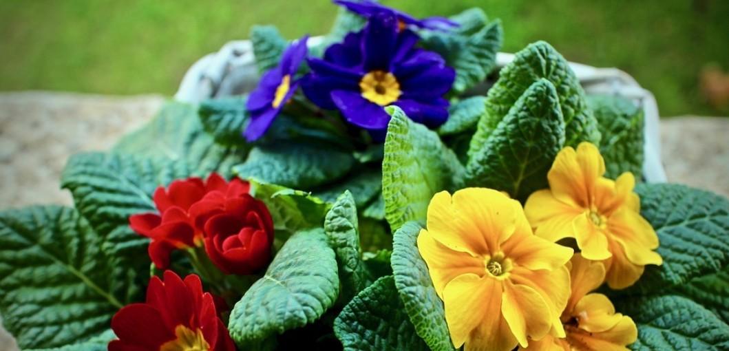 Gardening Can Improve Your Mood Gardening Magazine