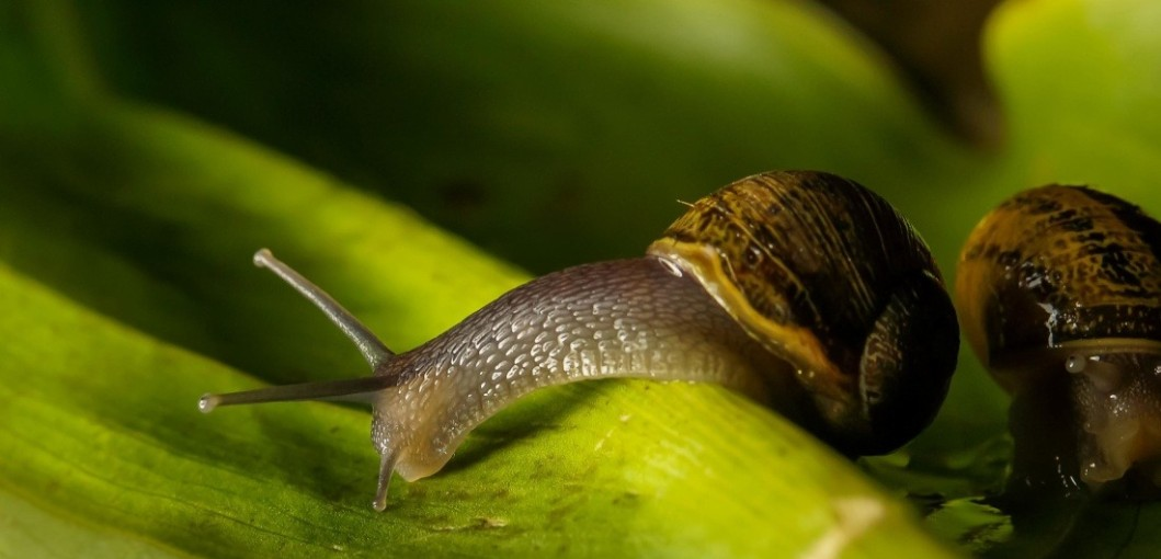 Here are 6 natural ways to get rid of slugs…