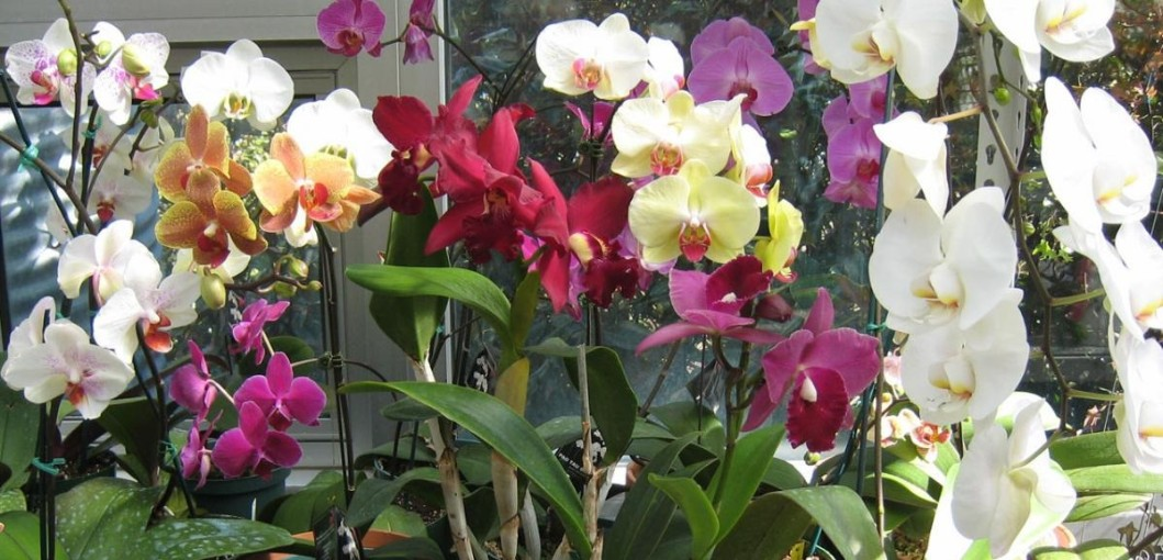 Her S How To Get Your Orchid To Rebloom Gardening Magazine