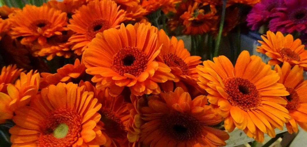 Here Are Some Orange Flowers You Should Consider Growing For Your