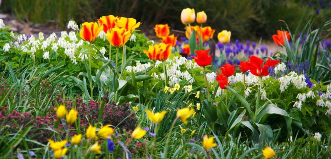 Before You Ever Open A Seed Catalog Or Dig Out Those Gardening Tools, Put  Pen To Paper And Start Planning With These Early Spring Gardening Tipsu2026