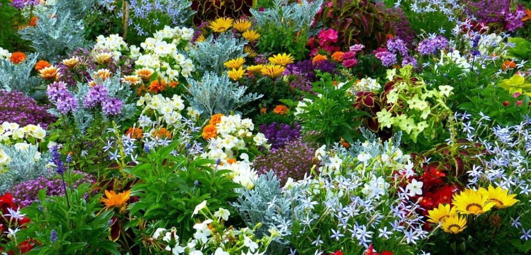 Home Flower Garden Images